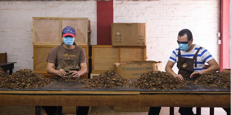 Các nhà máy xì gà mở lại trong bối cảnh bùng phát coronavirus