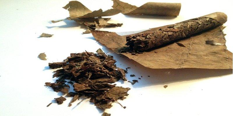 Bí quyết giúp khôi phục xì gà bị khô không ảnh hưởng đến chất lượng